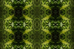 digital image of a fern